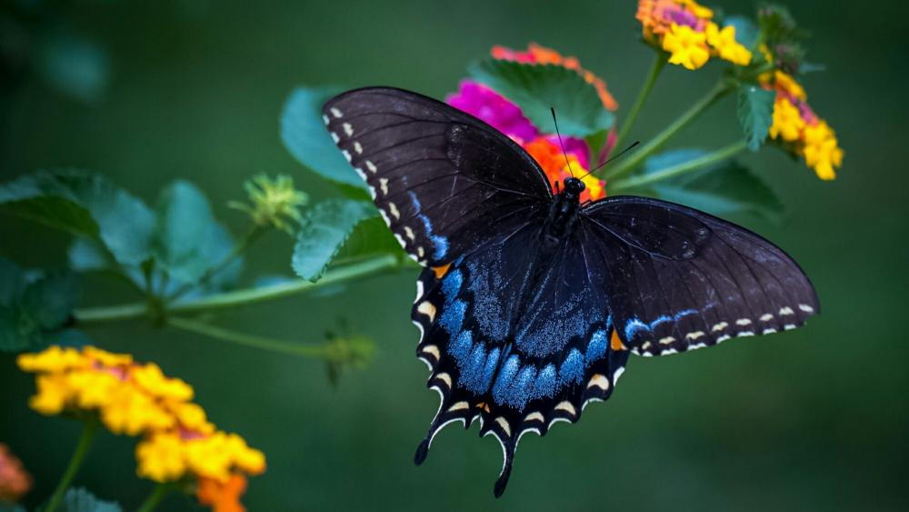 Wonderful butterfly macro photo wallpaper