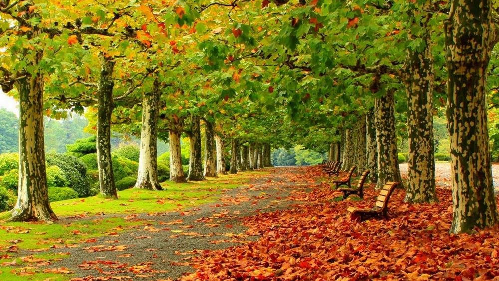 Beginning of autumn in the park wallpaper