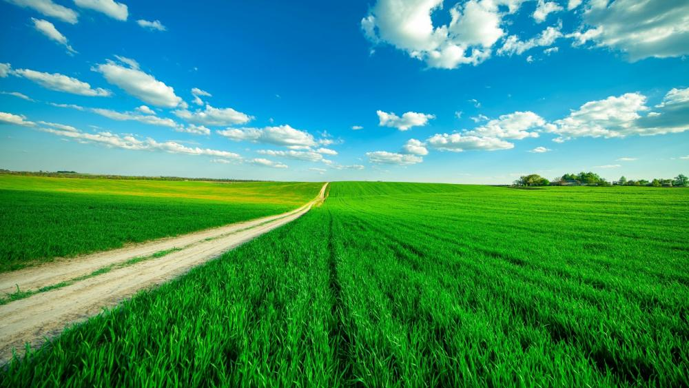 Blue sky with fluffy clouds above the endless dirt road wallpaper