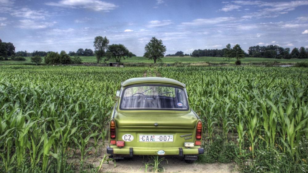 Trabant in the cornfield wallpaper