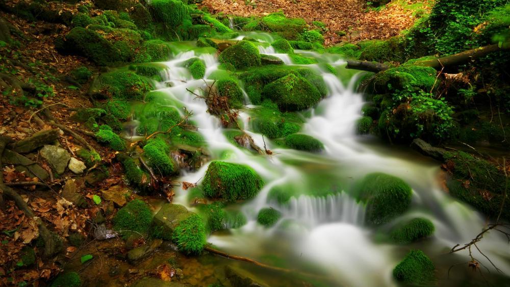 Mossy stones along the stream cascade wallpaper