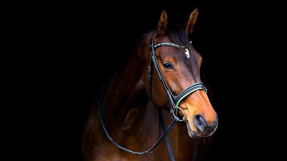 Horse in harness wallpaper