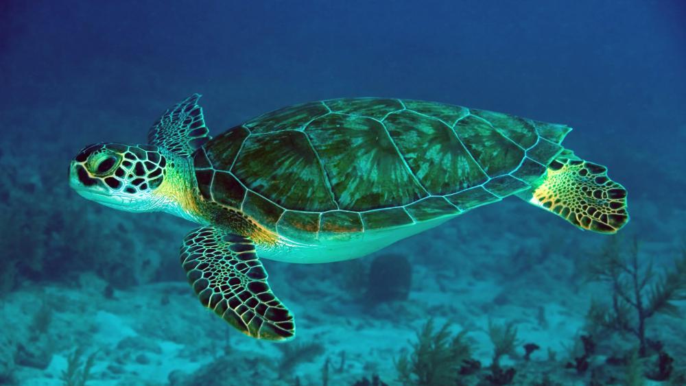 Sea turtle - Underwater photography wallpaper