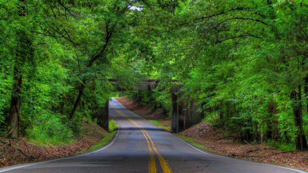 Tree-Lined road  wallpaper