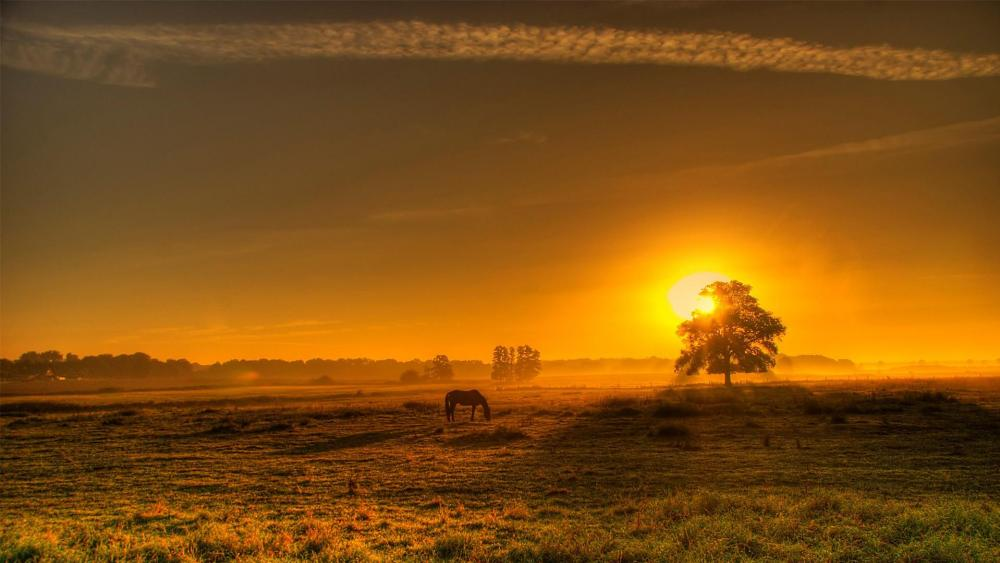 Sunset in the pasture wallpaper