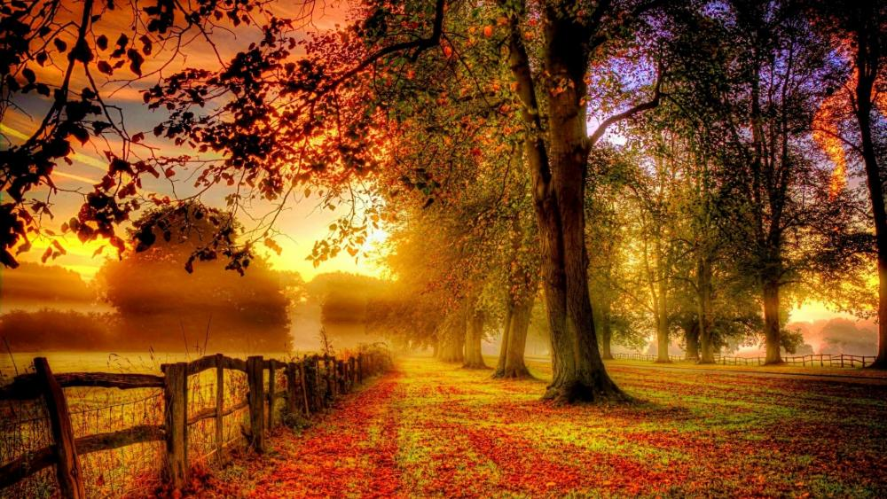 Long fence in the autumn scenery  wallpaper