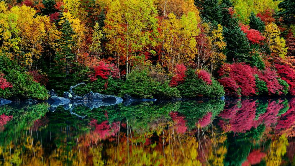 Colorful autumn reflection    wallpaper