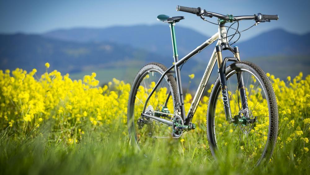 Mountain bike in the canola field ♂️ wallpaper