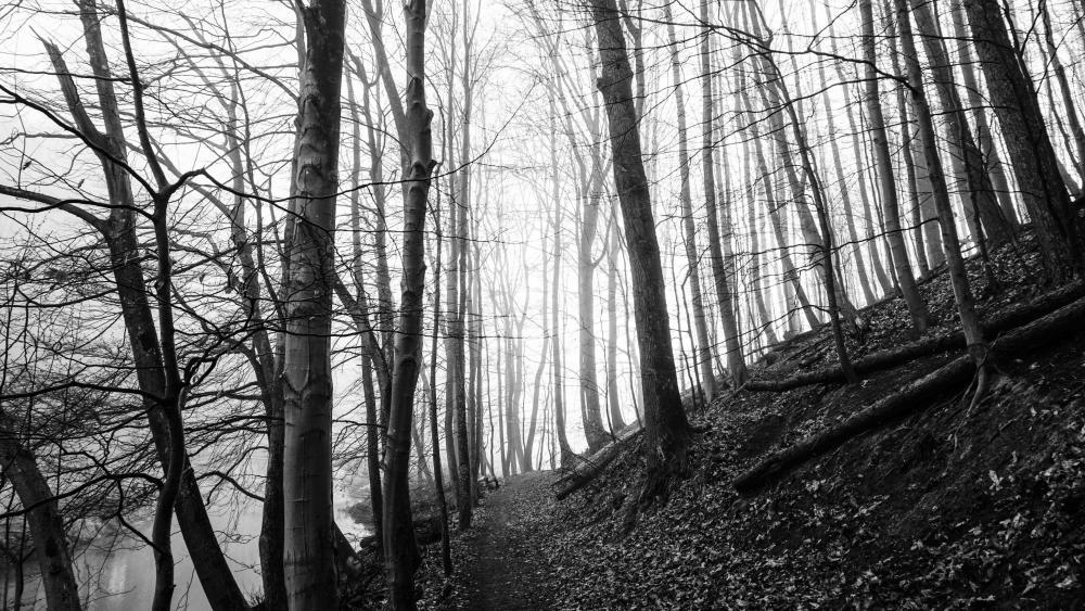 Hillside forest - Monochrome photography wallpaper