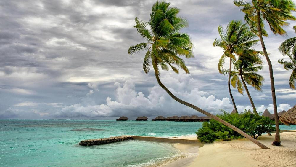 Palms on the beach  wallpaper