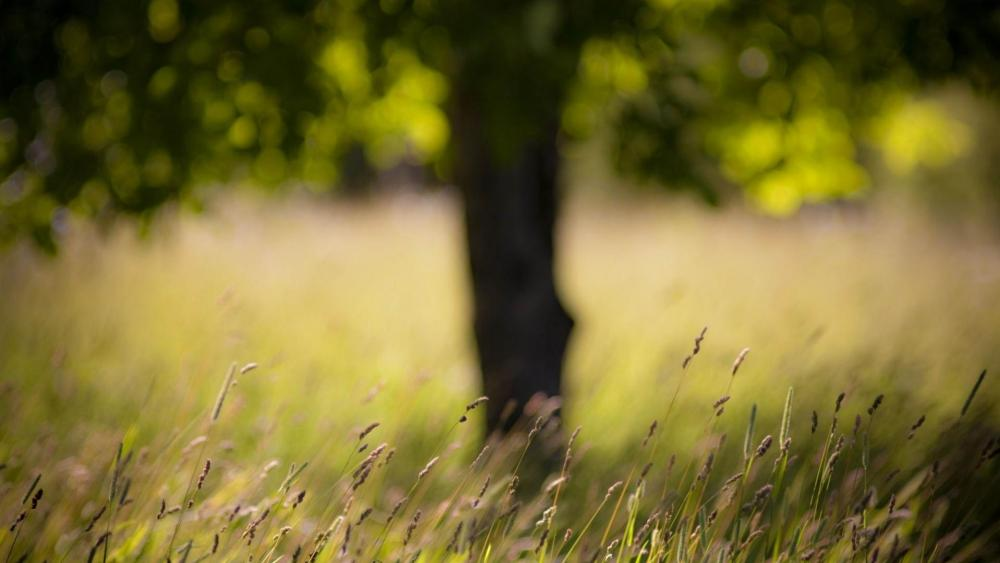 Grass field with a blurry tree wallpaper