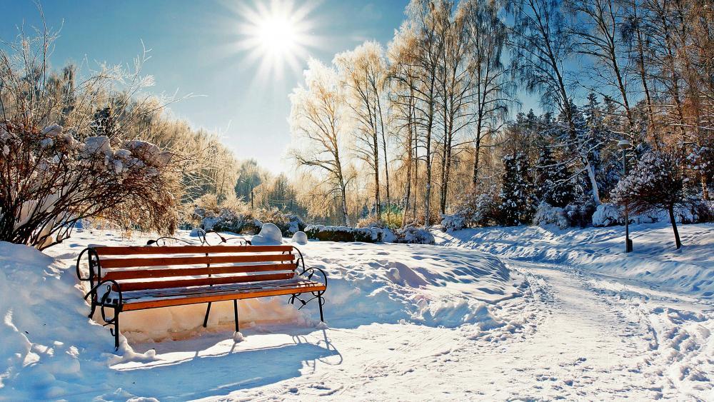 Winter park in the sunshine wallpaper