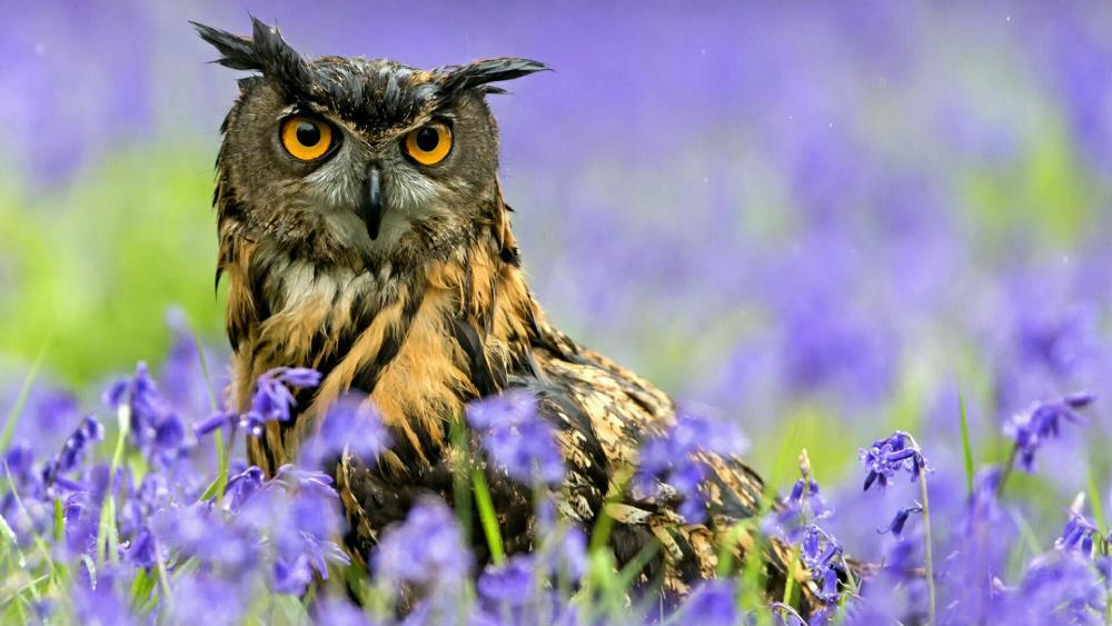 Eurasian Eagle Owl  wallpaper