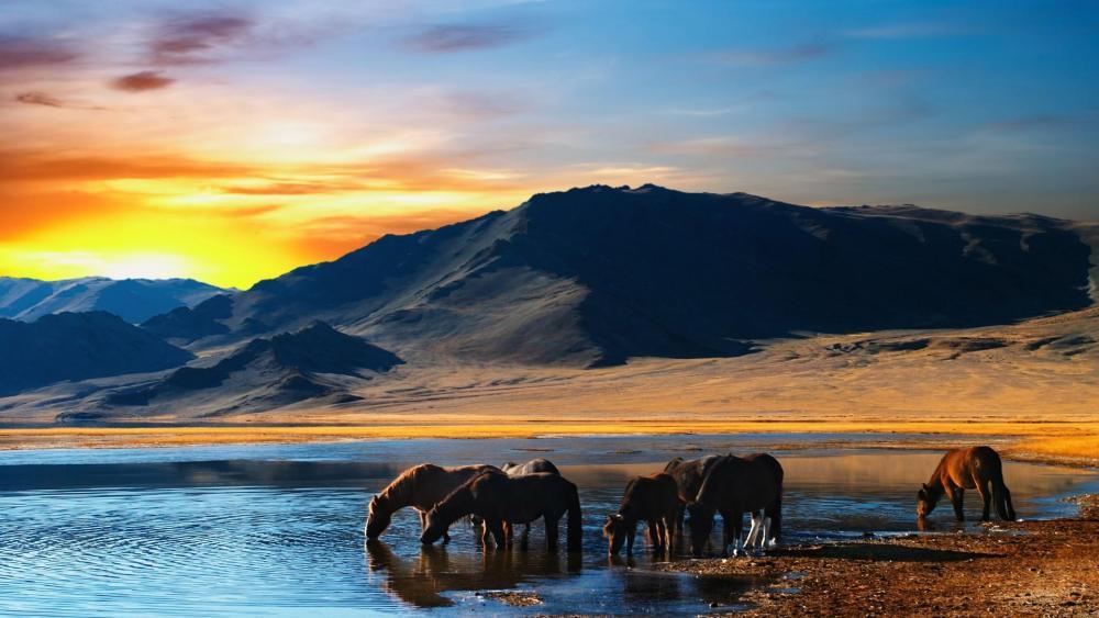 Wild horses in Mongolia wallpaper