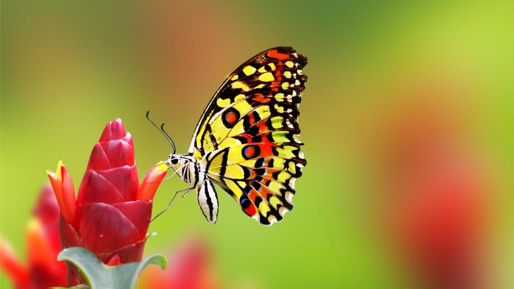 Nice butterfly on red flower wallpaper