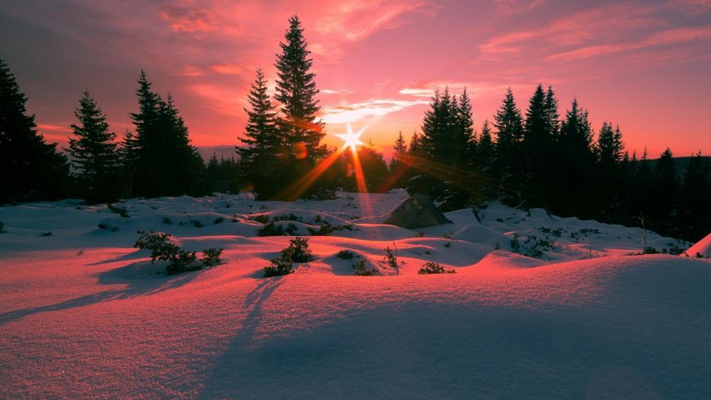 Winter sunbeams on Vitosha Mountain, Bulgaria wallpaper