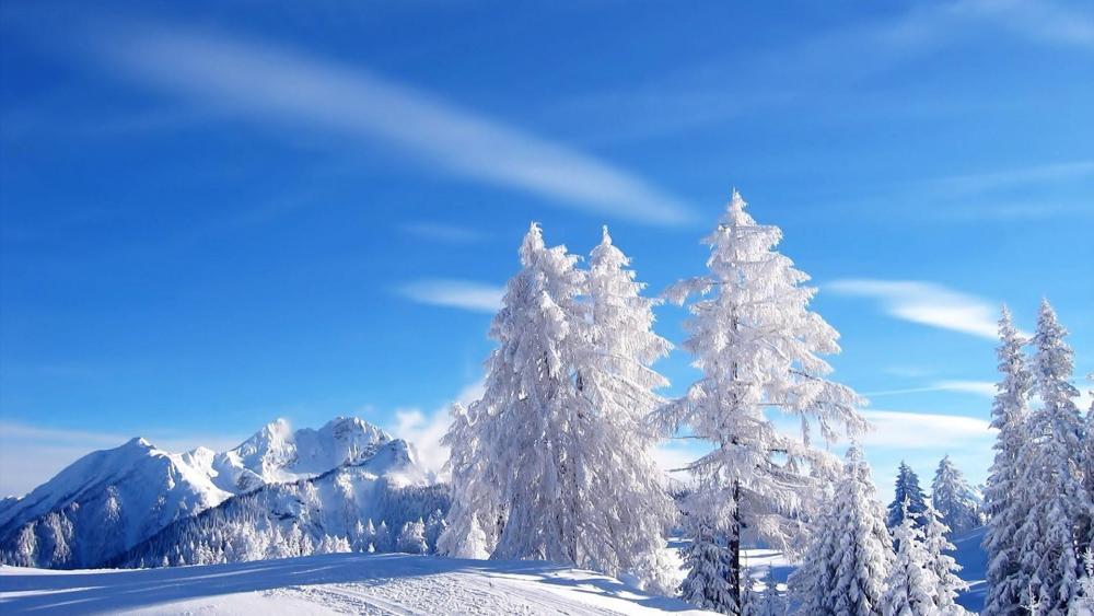 Winter blue sky wallpaper