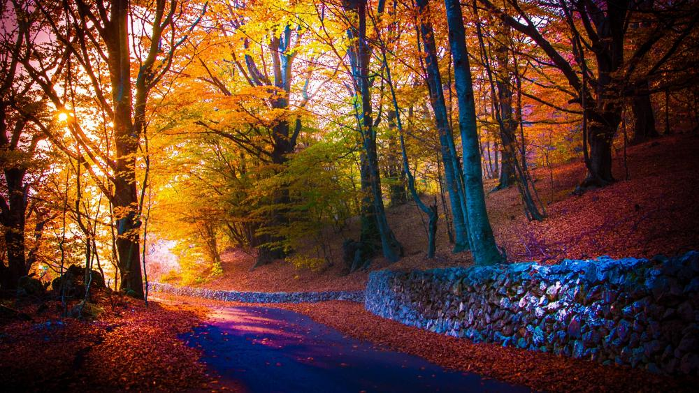 Autumn forest path  wallpaper