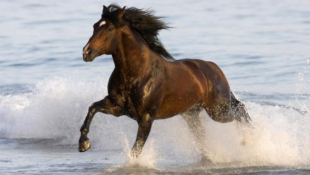 Dark horse running fast on water wallpaper