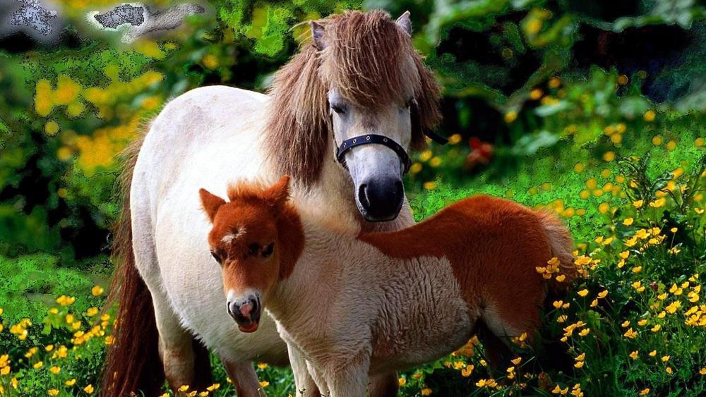 Mini Horses wallpaper