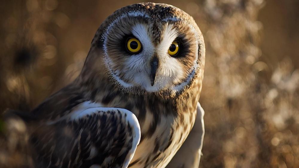 Owl photo wallpaper