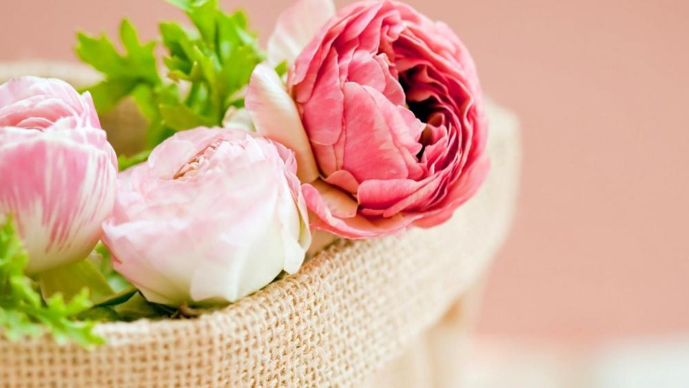Beautiful pink peony flowers wallpaper
