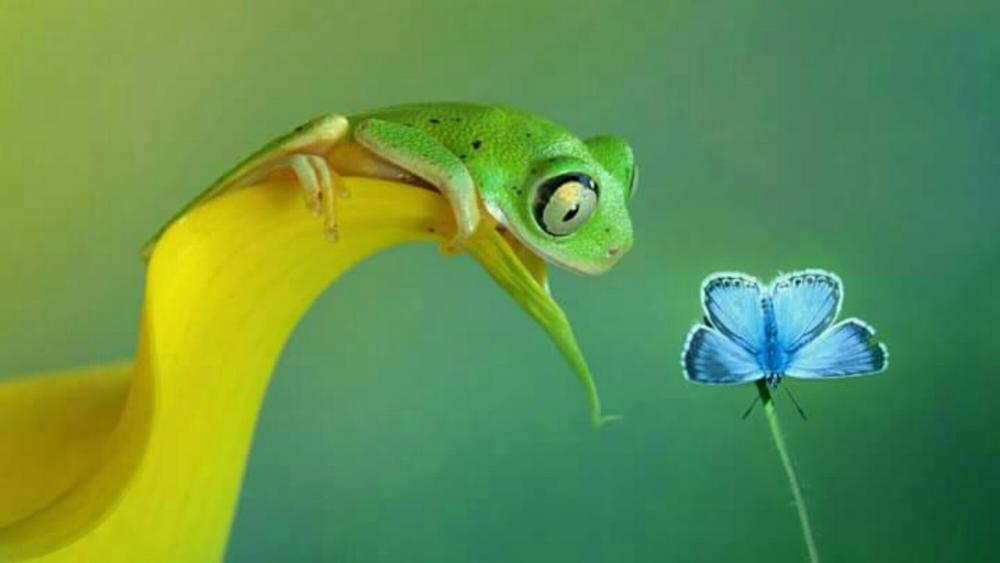 Tree frog  wallpaper