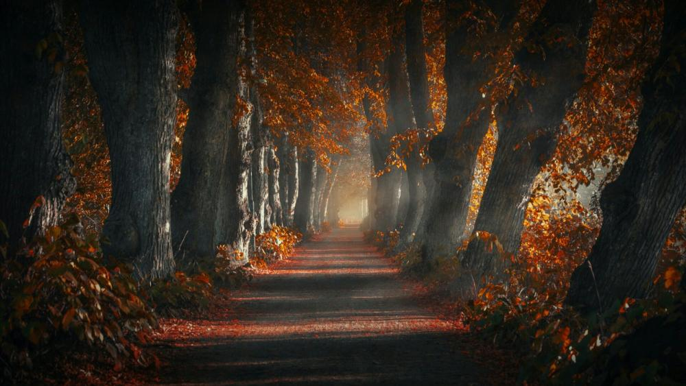 Tree alley in autumn wallpaper