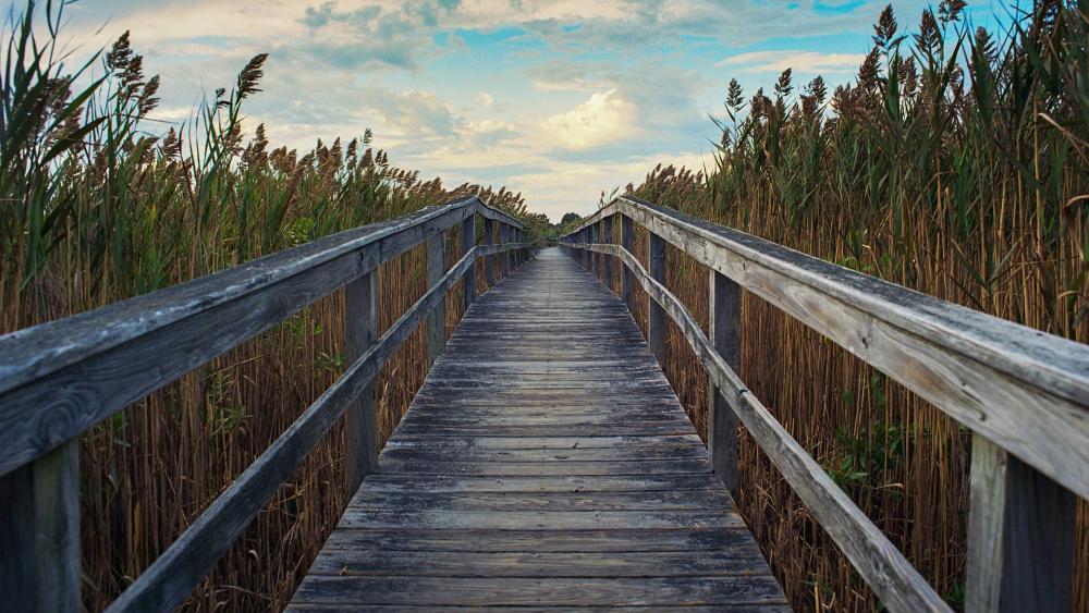 Boardwalk through marsh reeds wallpaper