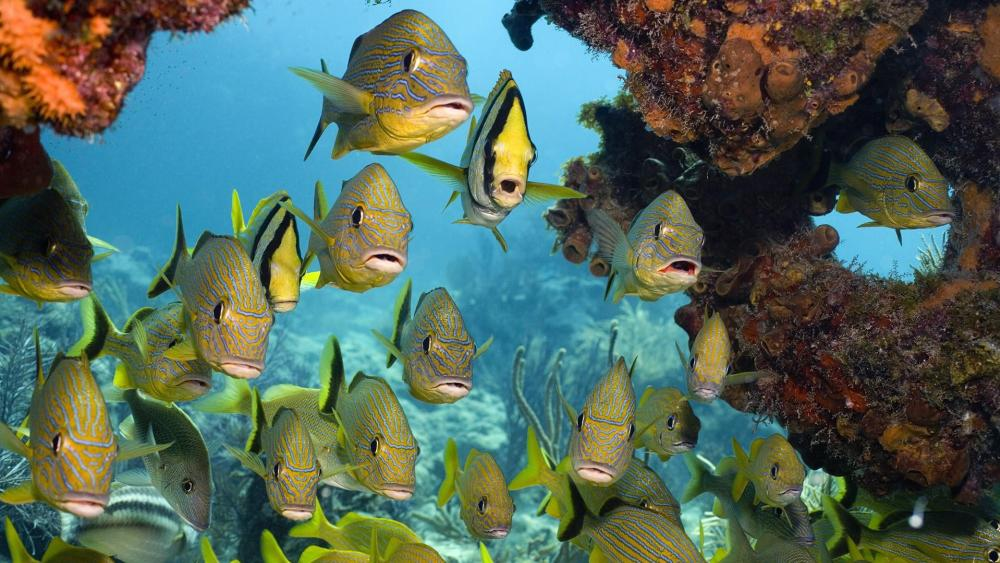Tropical fishes wallpaper