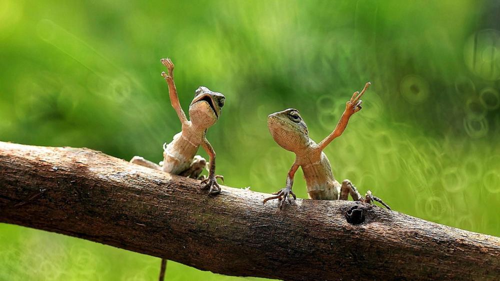 Dancing lizards wallpaper