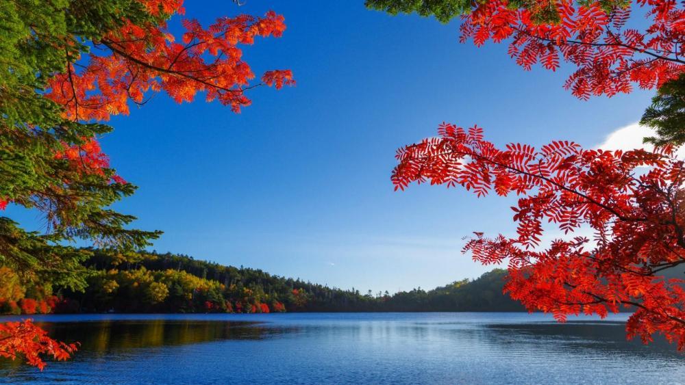 Autumn lake wallpaper