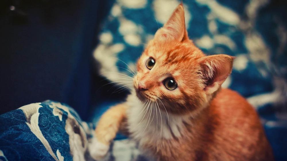 Sweet kitten on the sofa wallpaper