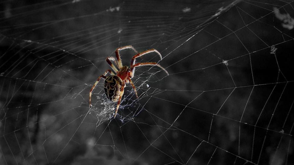 Spider - Macro photography wallpaper