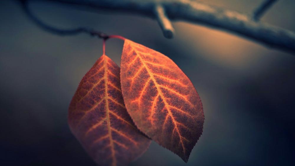 Autumn leaves - Macro photography wallpaper