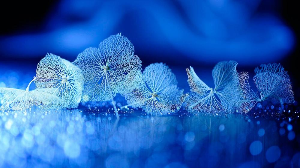 Dry leaves - Blue photography art wallpaper
