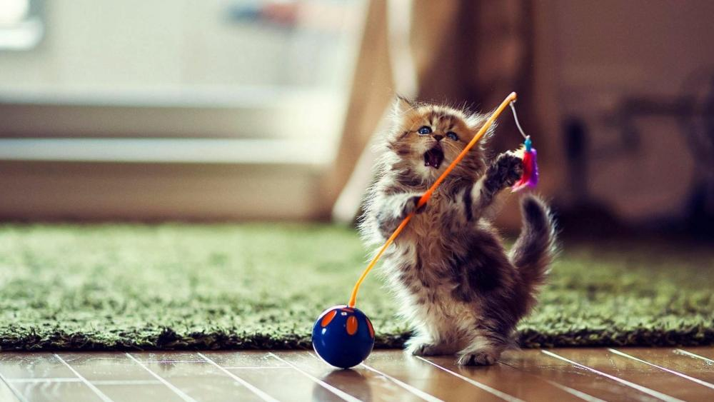 Cute playing kitten wallpaper