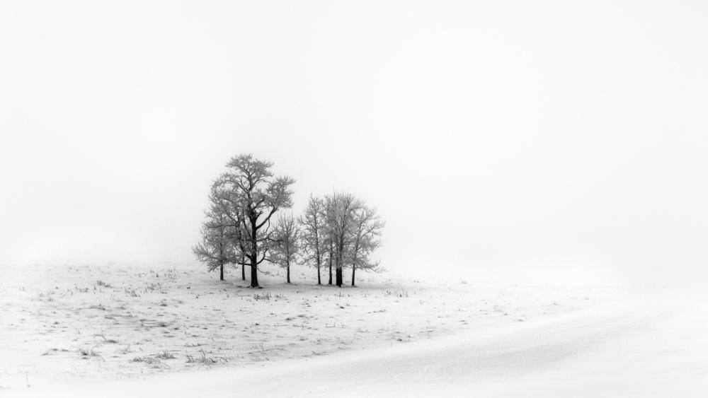 Black and white winter photo wallpaper