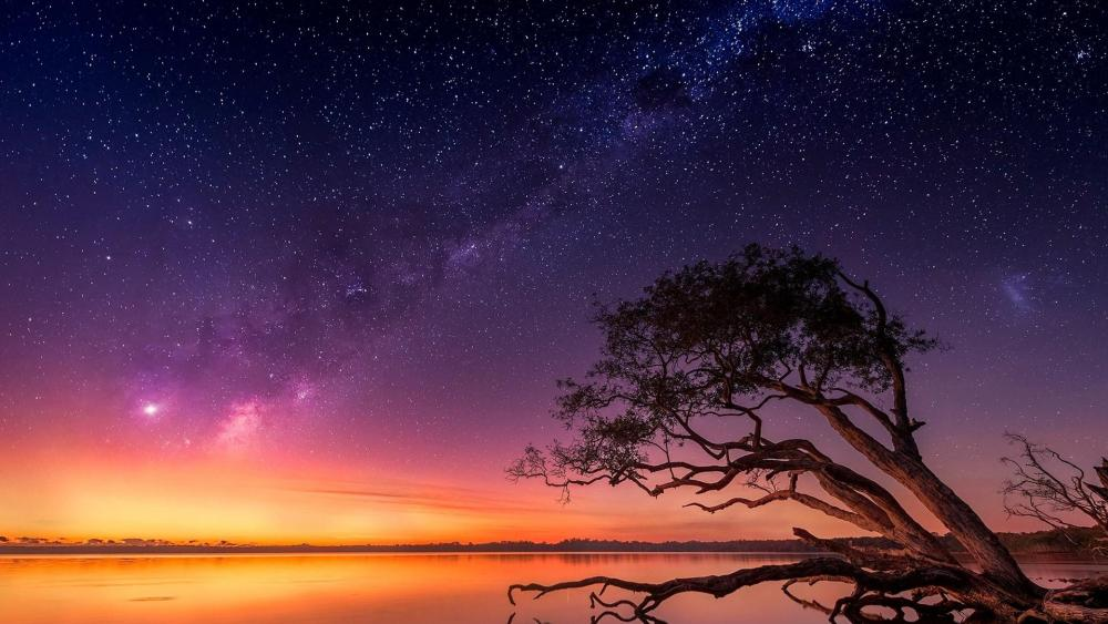 Colorful starry sky with tree wallpaper