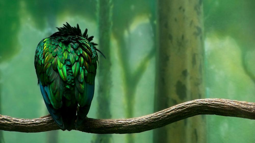 Green Bird -  Fantasy Art wallpaper