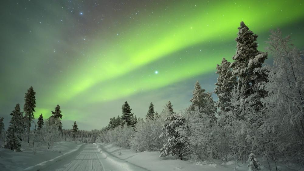 Aurora Borealis above a winter path wallpaper