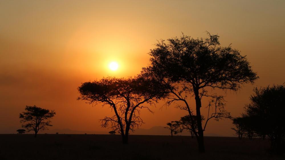 Sunset in the Serengeti wallpaper