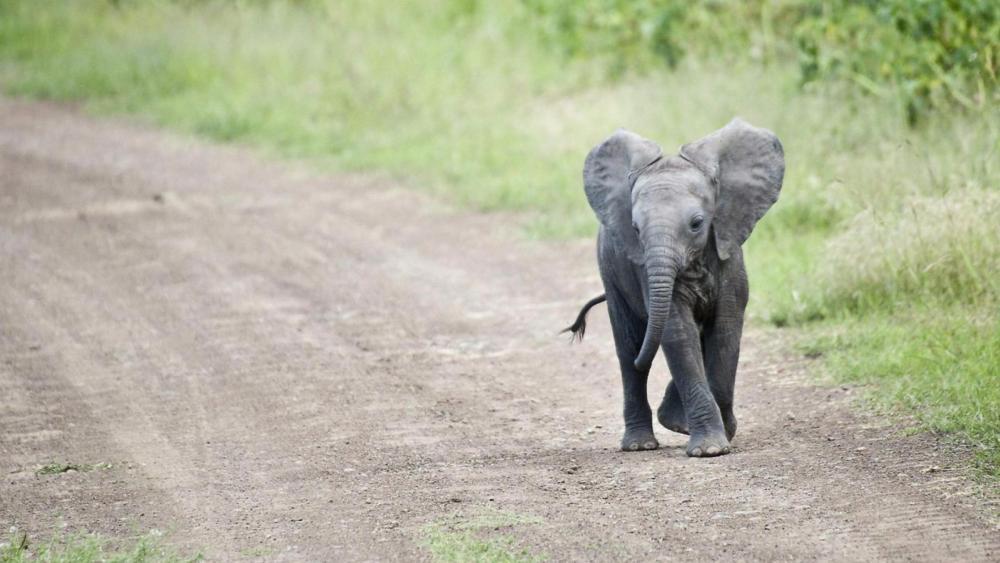Cute baby elephant wallpaper