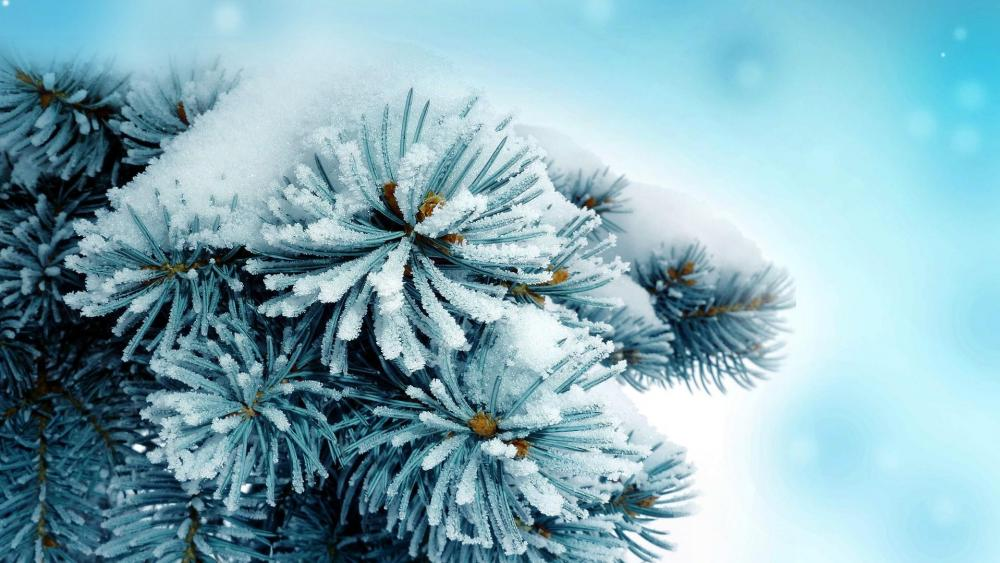 Close up snowy pine tree wallpaper