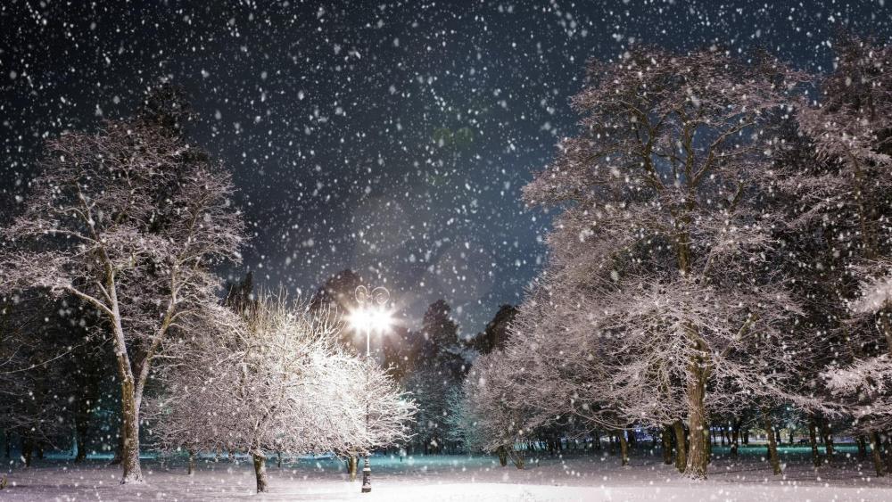Snowy winter park at night wallpaper
