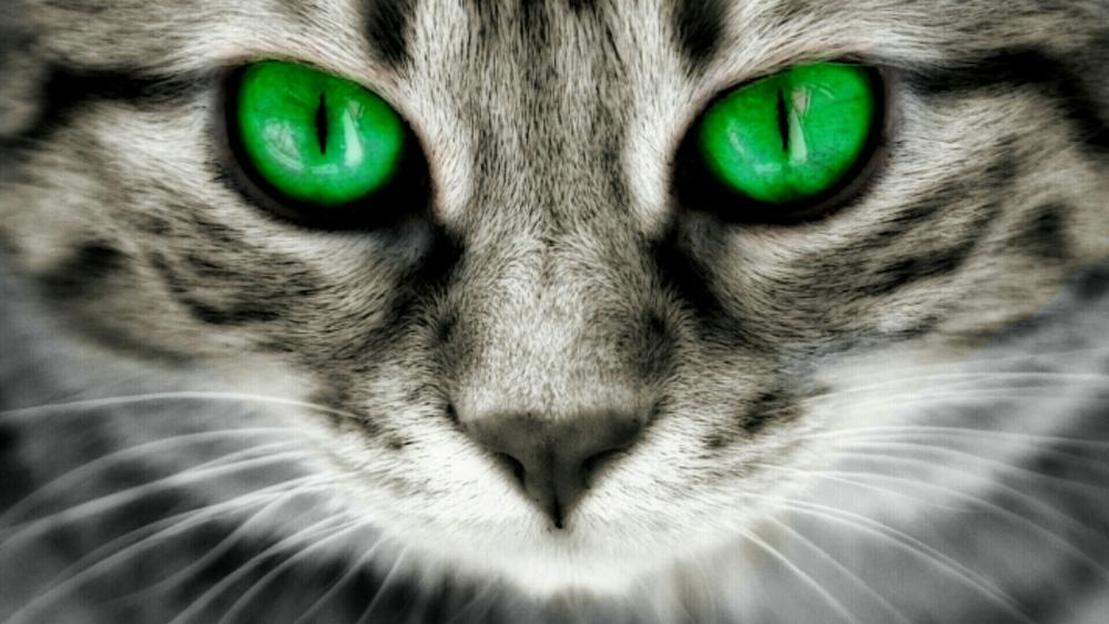 Green-eyed cat wallpaper