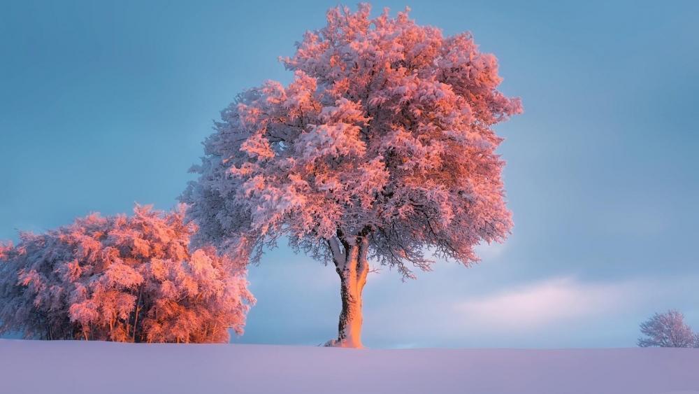 Frozen winter in the pink sunset wallpaper