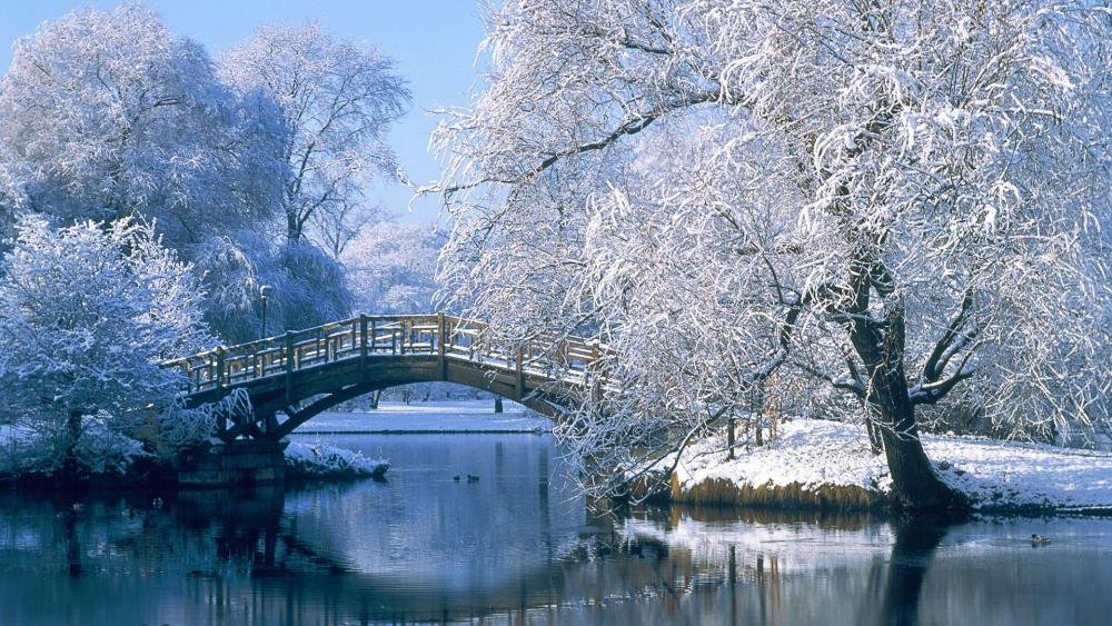Frosty winter park wallpaper