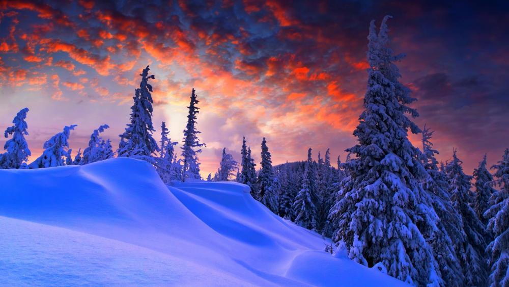 Snowy fir forest wallpaper