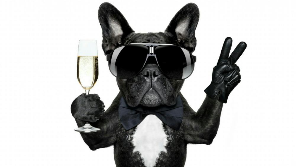 French Bulldog celebrating new years eve with champagne wallpaper